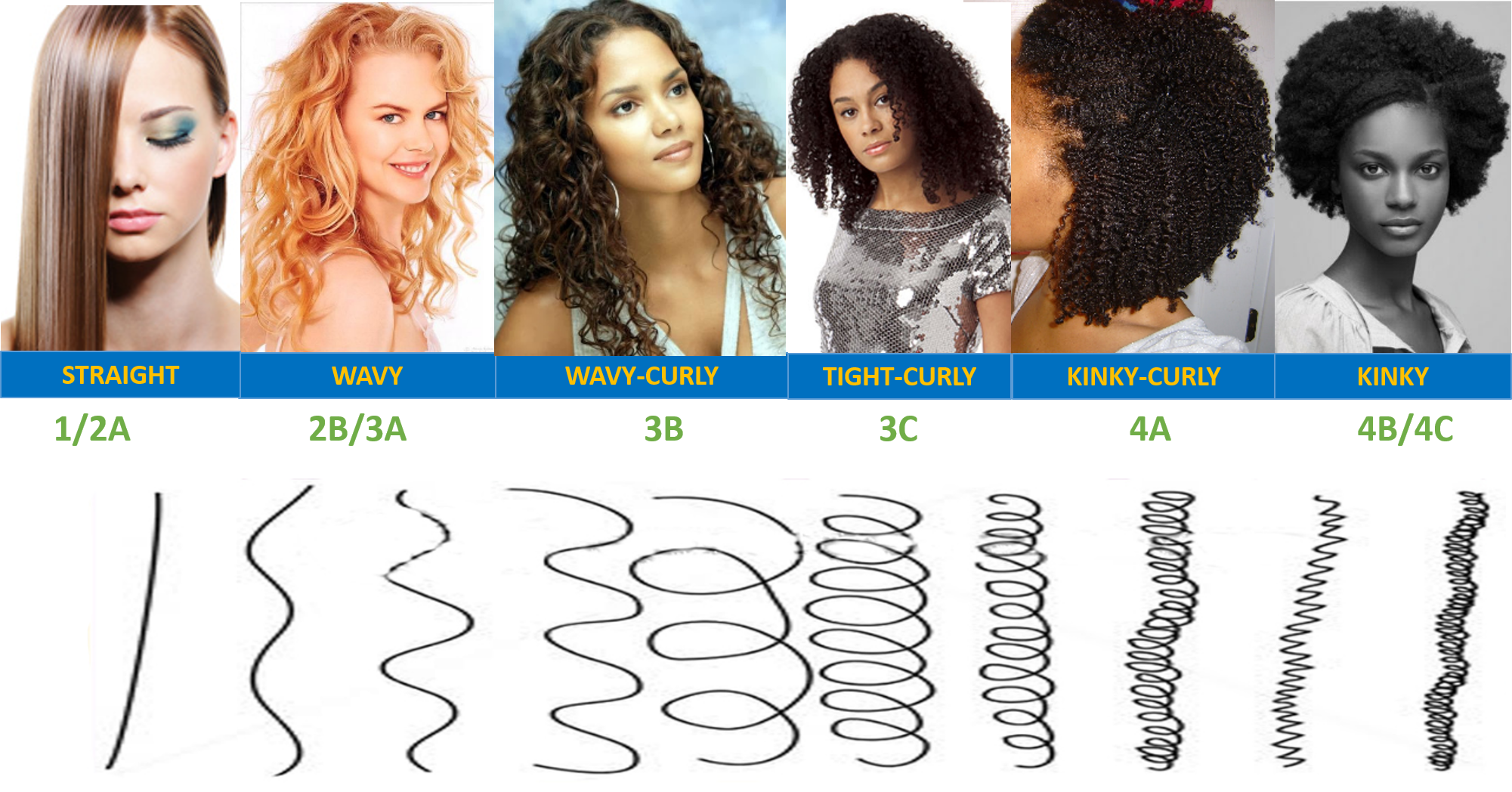 Image Result For Curl Types Hair Type Chart Curly Hair Types