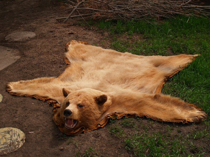 bear skin rug best 25 skin rug ideas on faux skin 31186
