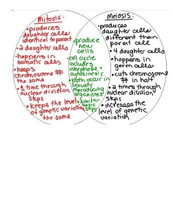 mitosis vs meiosis venn diagram | Study | Pinterest | Venn ...