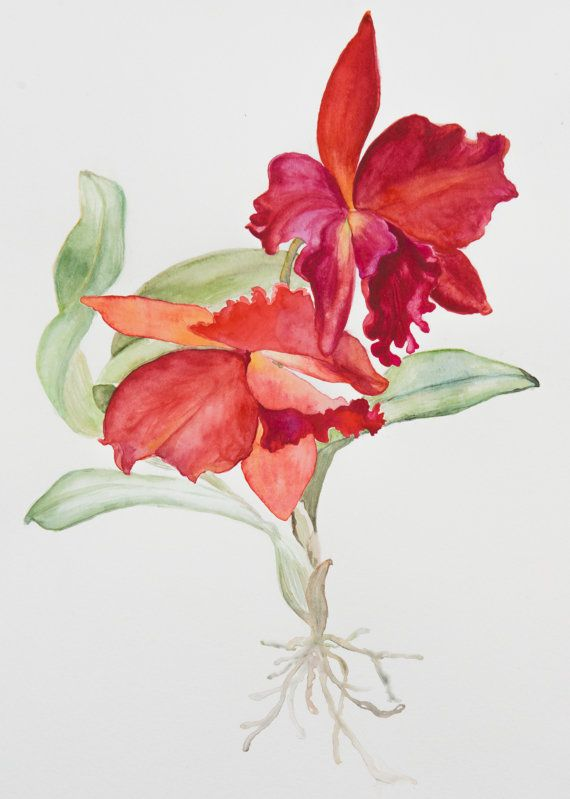 Red Cattleya Orchid Botanical Watercolor Painting By Fleurrific 85 00 Floral Watercolor Botanical Watercolor Orchid Drawing