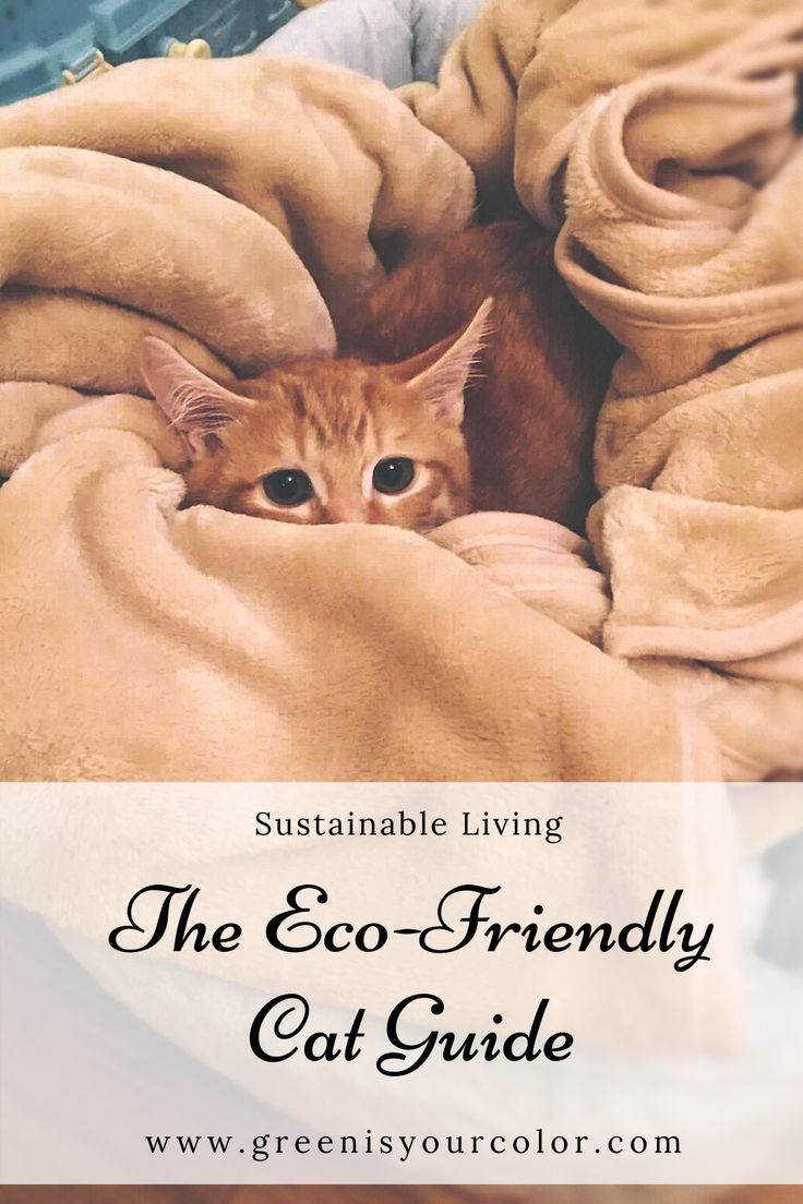 The EcoFriendly Cat Guide in 2020 (With images) Cats