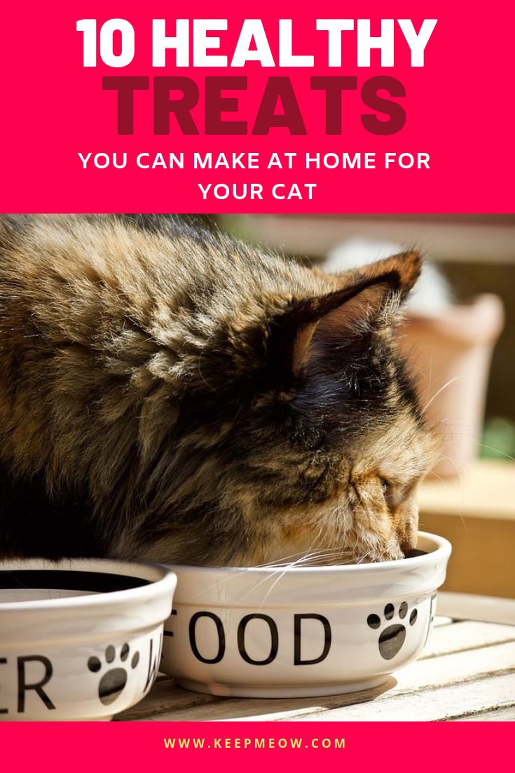 10 Healthy Cat Treats Recipes You Can Make At Home For Your Cat Healthy Homemade Cat Treats Catfood Healthy Cat Food Cat Treats Homemade Chicken Baby Food