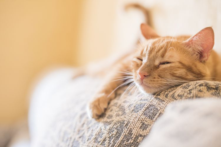 Dealing With The Loss Of Your Cat Cats Cat Breeds Lazy Cat