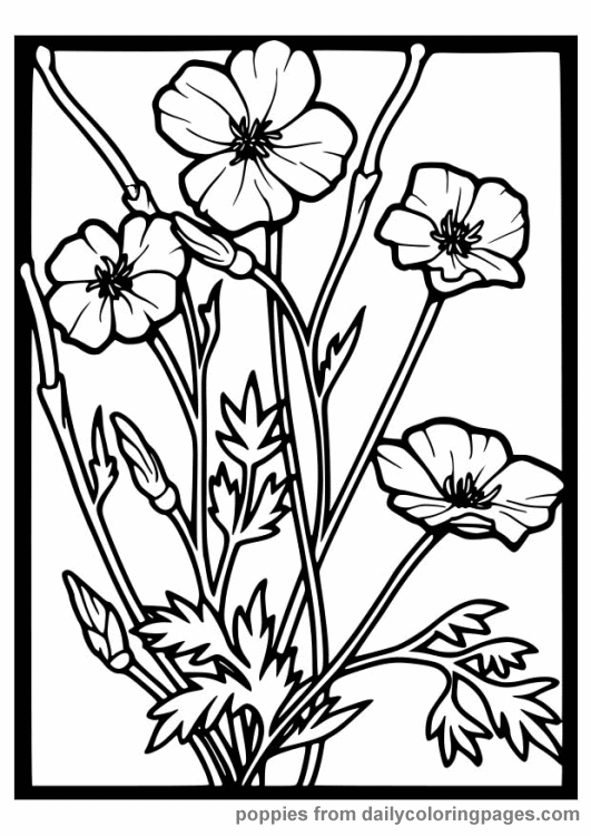 flowers coloring pages color printing flower coloring pages free 56 - Poppy Flower Coloring Pages