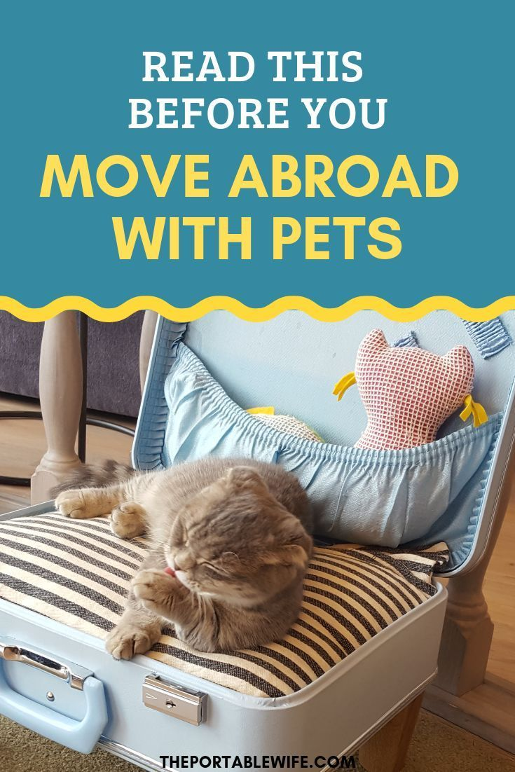 What You Should Know About Moving Abroad With Pets Pet