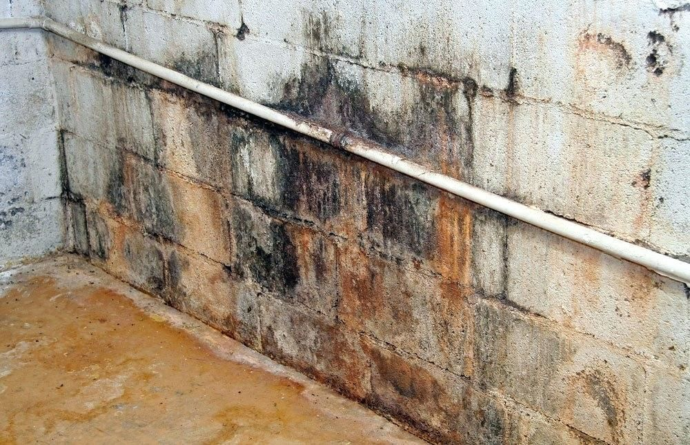 How To Get Rid Of Mold In Basement Diy Mold Removal ...