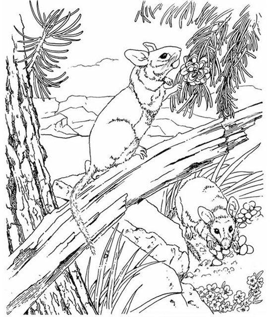 Картинки по запросу рисунок для выжигания по дереву рыба ...