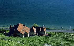 """Résultat de recherche d'images pour """"vignobles au bord du lac leman"""""""