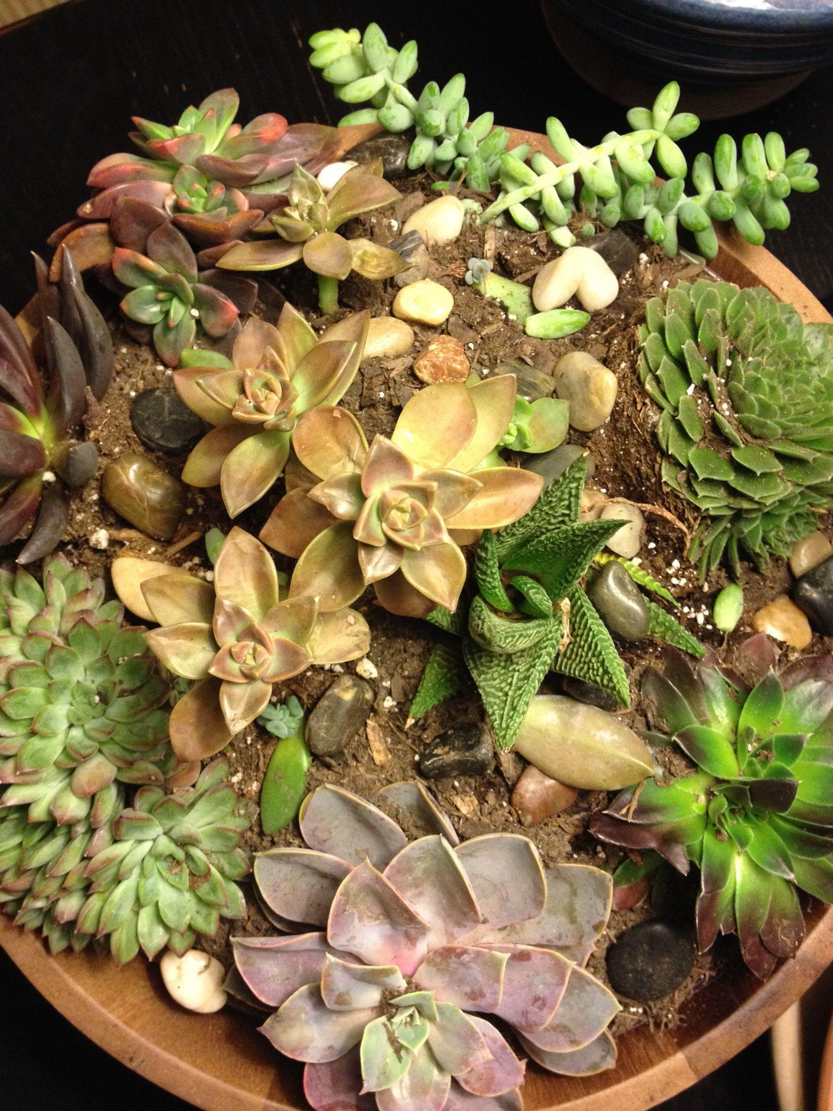 Indoor succulent garden in a wooden bowl. | Succulents! | Pinterest ...
