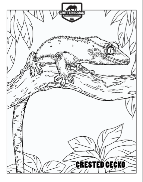 Crested Gecko Coloring Page C S W D Reptile Party Coloring Pages Crested Gecko