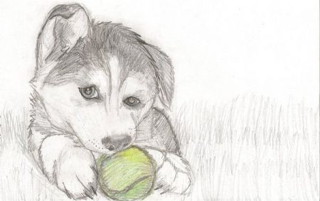 How To Draw Puppy Drawing Love To Draw Dogs So I Drew A Husky Puppy With A Tennis Ball Animal Drawings Husky Drawing Puppy Drawing Easy