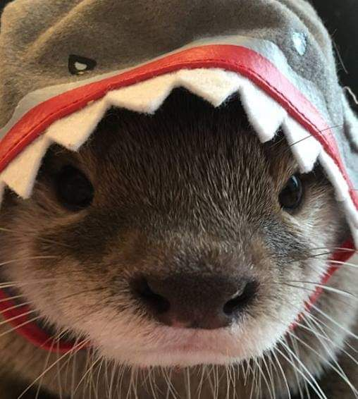 Pet me or give me snacks. Otterwise I'm leaving.https