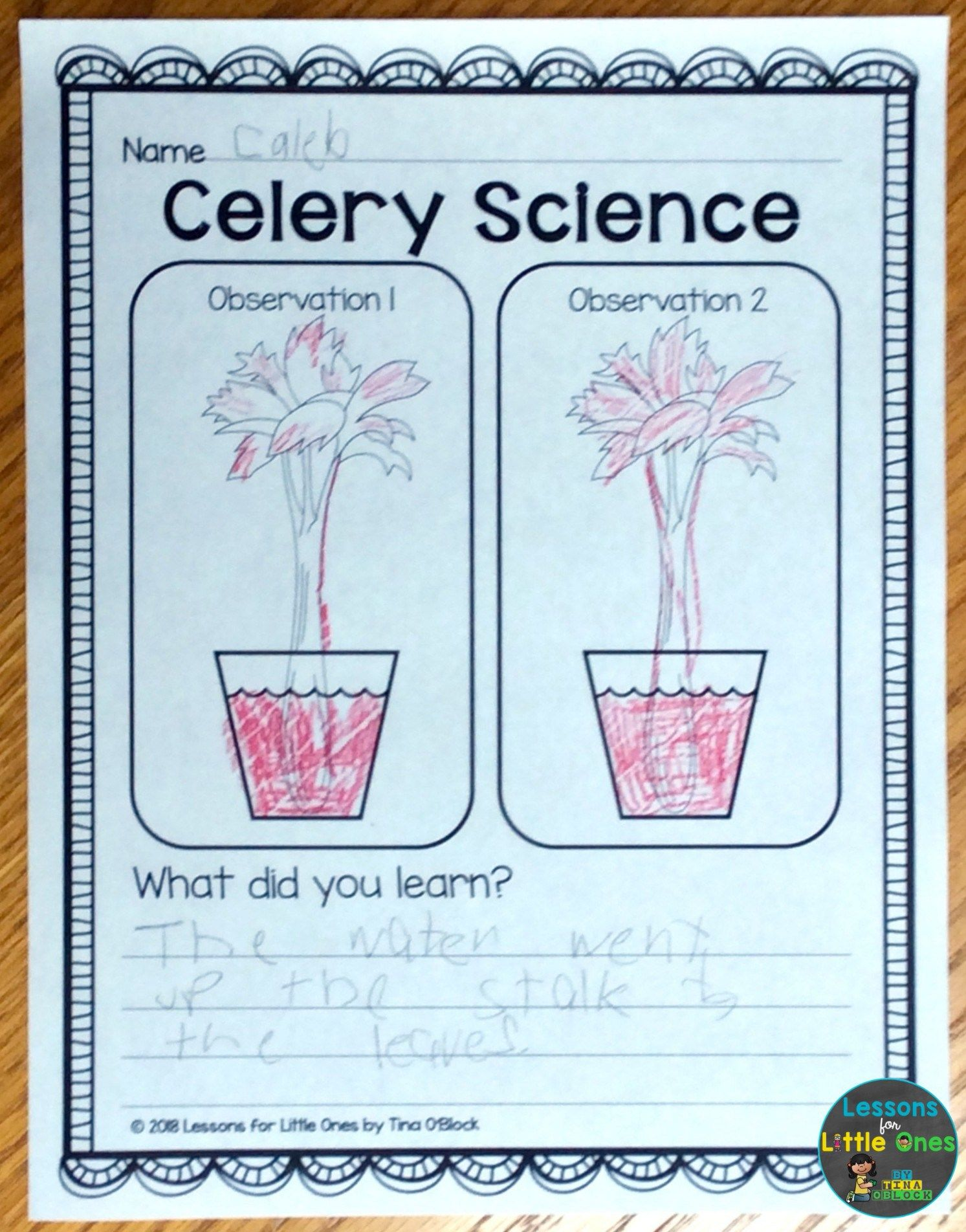 Plants Science Experiments Amp Teaching How Plants Grow