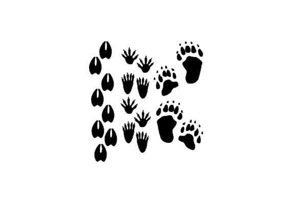Deer Racoon Bear Forest Animal Tracks Vinyl by IndigoChicCreations, $10.00