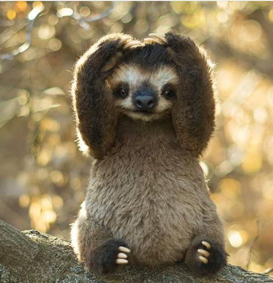 Cute sloth! I can't tell if it's a real sloth it not. #cutesloth