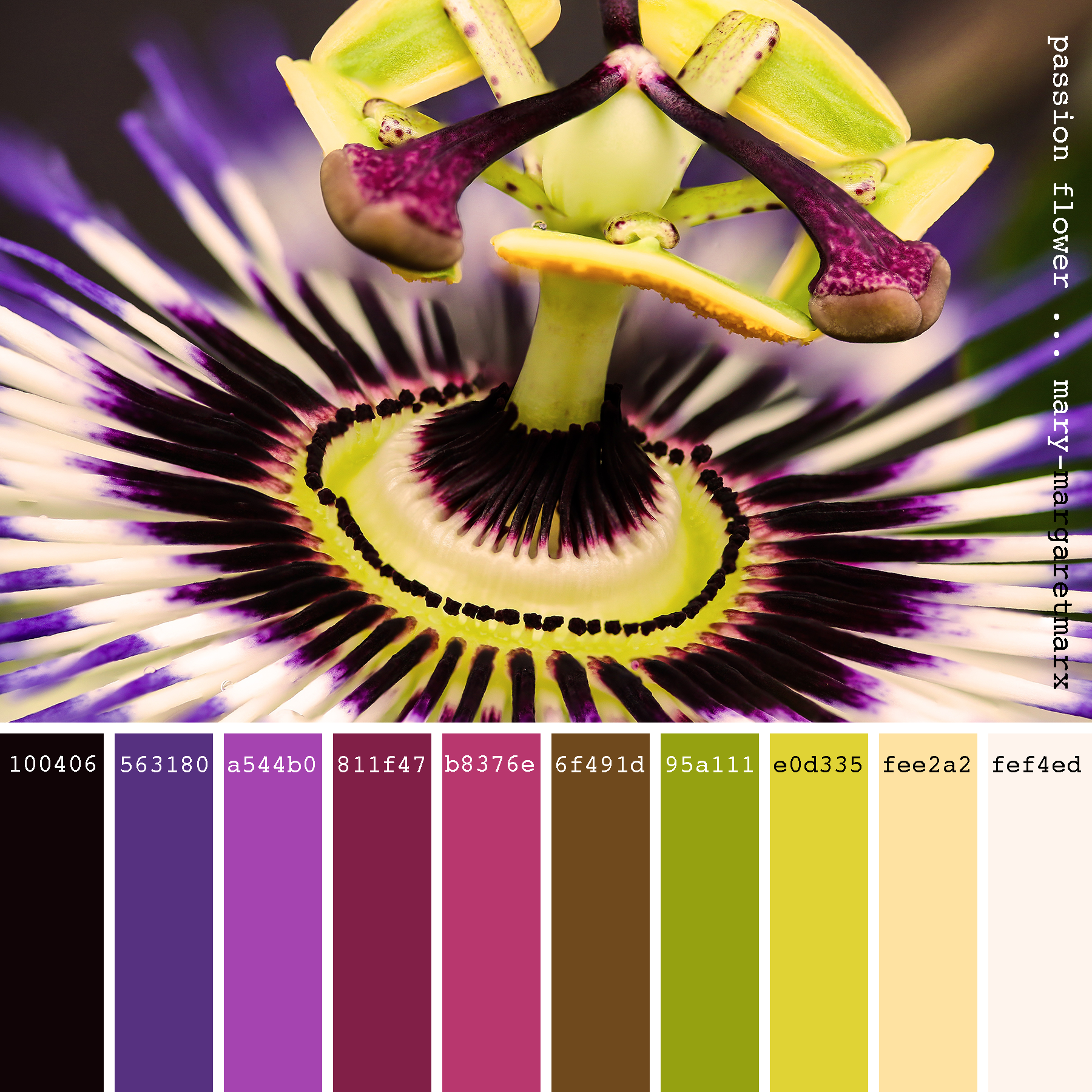 Passion Flower Mary Margaretmarx Color Colors Colour Colours Colorpalette Colorpalettes Palett Color Palette Design Color Palette Color Me Beautiful