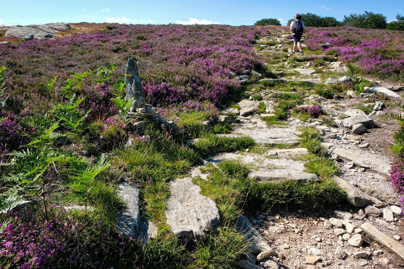 Plateau Du Caroux Herault Languedoc Parc Naturel Regional Du Haut Languedoc France Plateauducaroux Herault Parc Naturel Regional Parc Naturel Herault