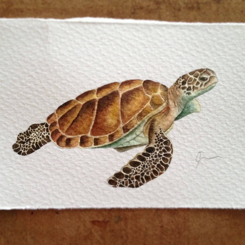 Sea Turtle Sea Turtle Painting Sea Turtle Watercolor