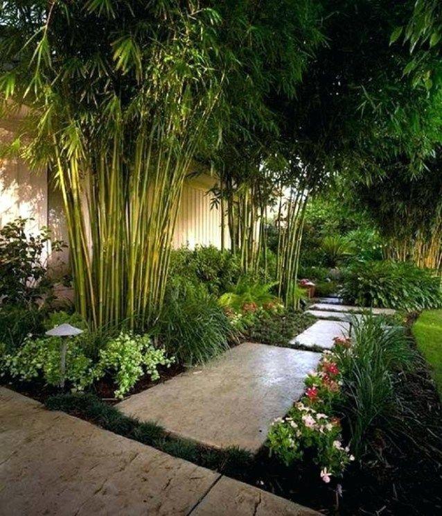 Amazing Bamboo Garden Ideas Backyards Beautiful Bamboo Garden