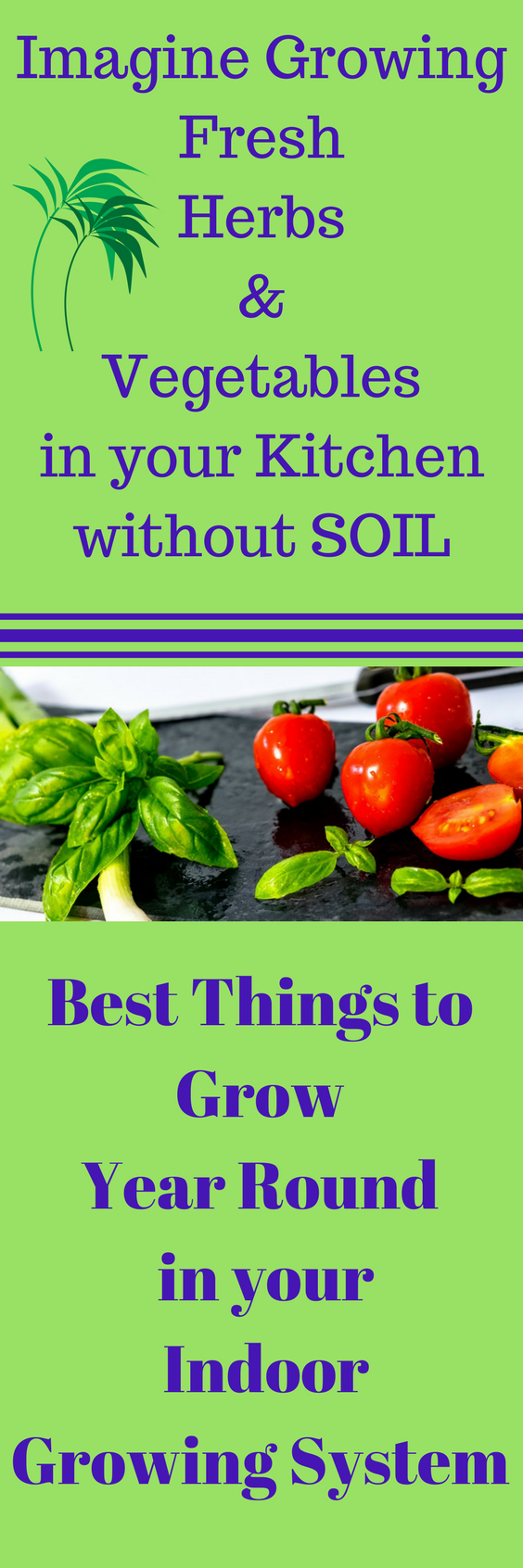 Best Things To Grow In Aerogarden Growing Vegetables 400 x 300