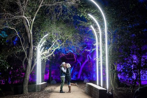 Enchanted Forest Of Lights At Descanso Gardens