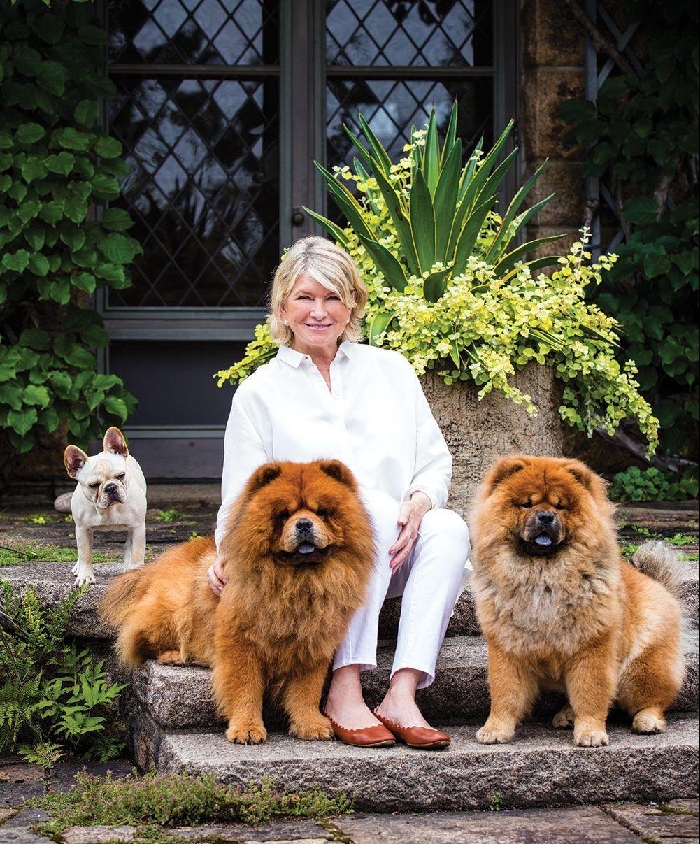 martha stewart, martha stewart's dogs