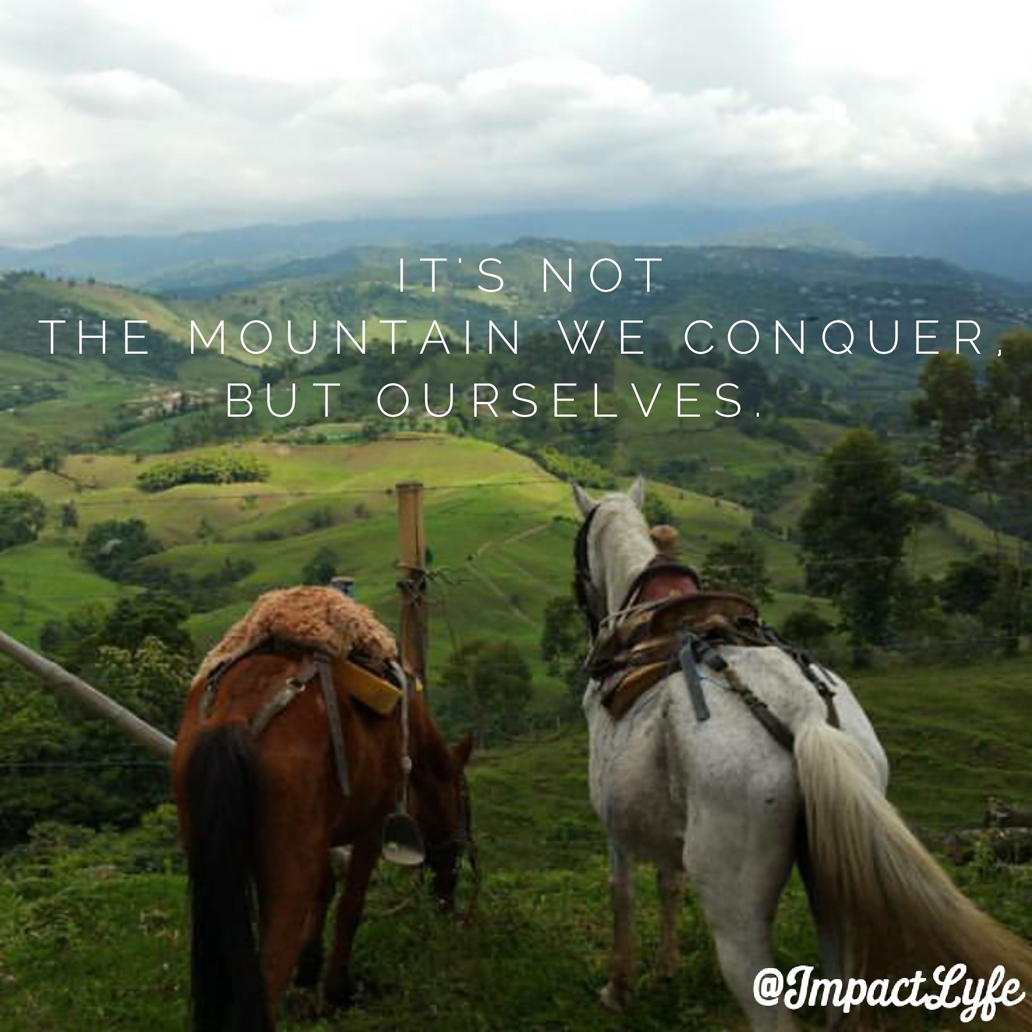 Conquer yourself, and you can conquer anything in your path. #inspirational #motivational #believeinyourself