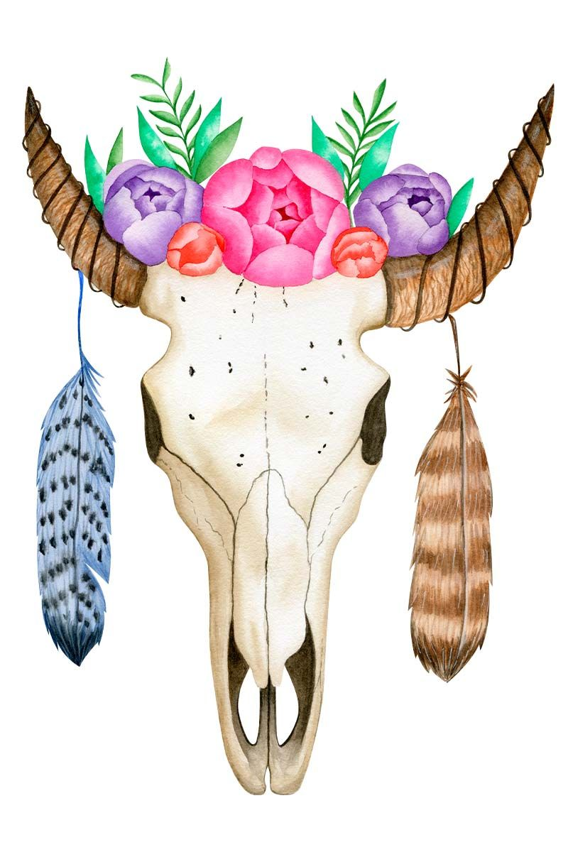 Boho Dreamcatcher And Animal Scull Clipart Dream Catcher Boho Etsy Scull Drawing Cow Skull Illustration