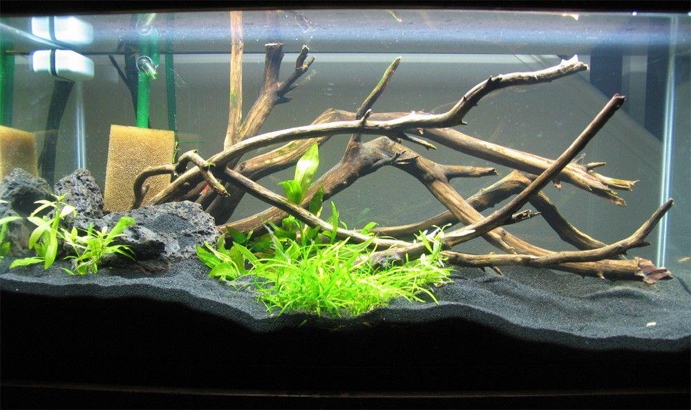 Stick driftwood aquarium ideas pinterest aquariums for Driftwood for fish tank