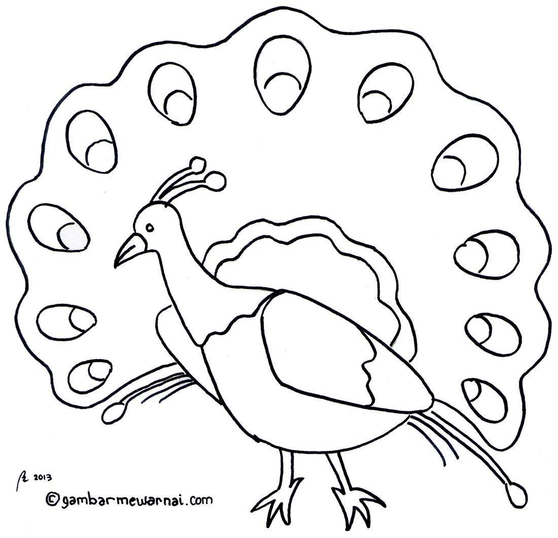 Gambar Mewarnai Binatang Fery Owl Coloring Pages Art Places To