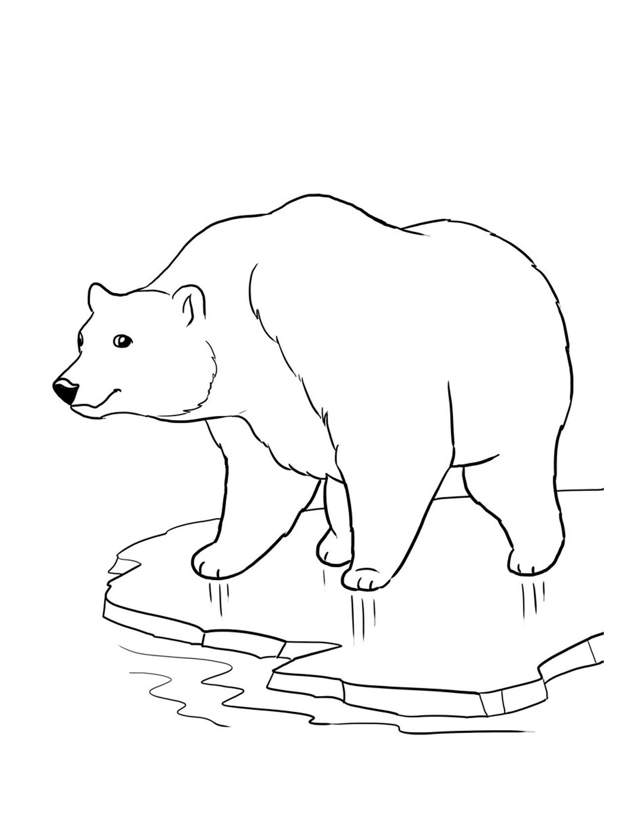 color sheets of polar bears endangered animals coloring pages