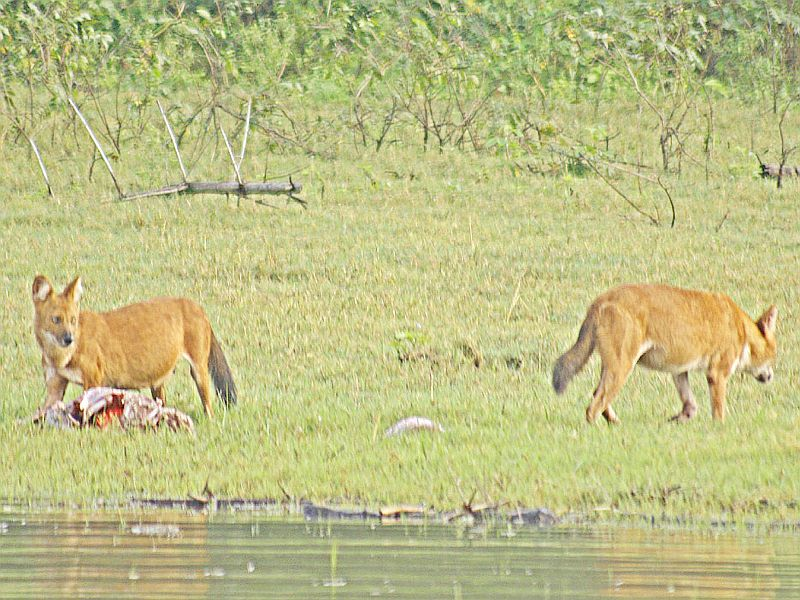 Wildlogs at kabini. Resorts near Bangalore presents