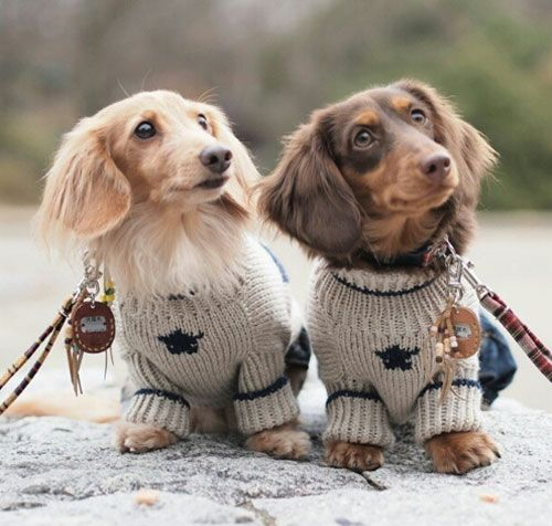 love the sweaters