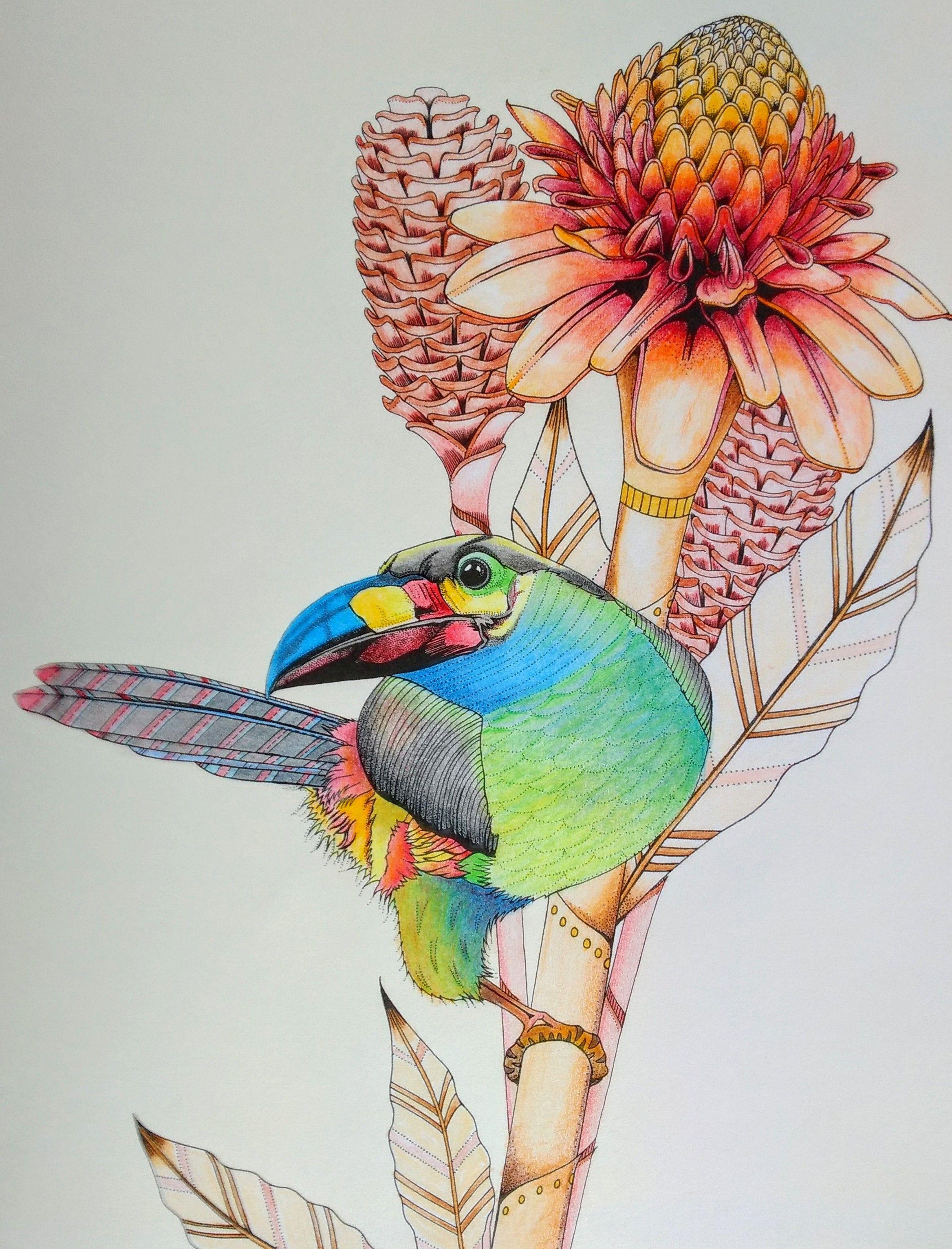 Uit Het Boek Vogel Paradijs Van Daisy Fletcher From The Book Birdtopia From Daisy Fletcher Gekleurd Door Adri Colored By A Art Flower Art Coloring Books
