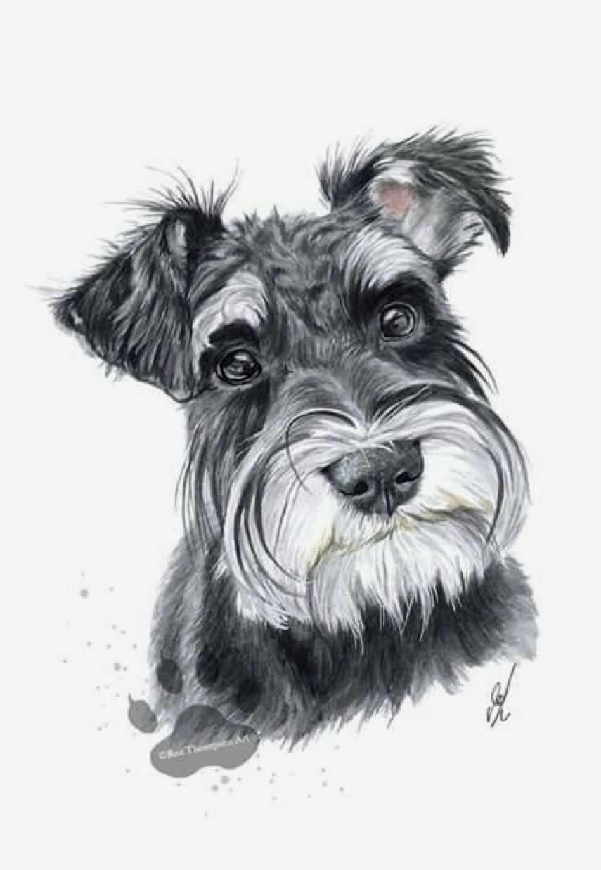 Pin By Terri Shelton On Dogs And Dogs Schnauzer Drawing Dog Paintings Schnauzer Art