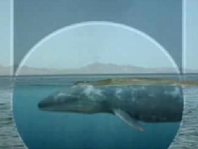 What is the biggest animal ever to exist on Earth? | ? WHY ...