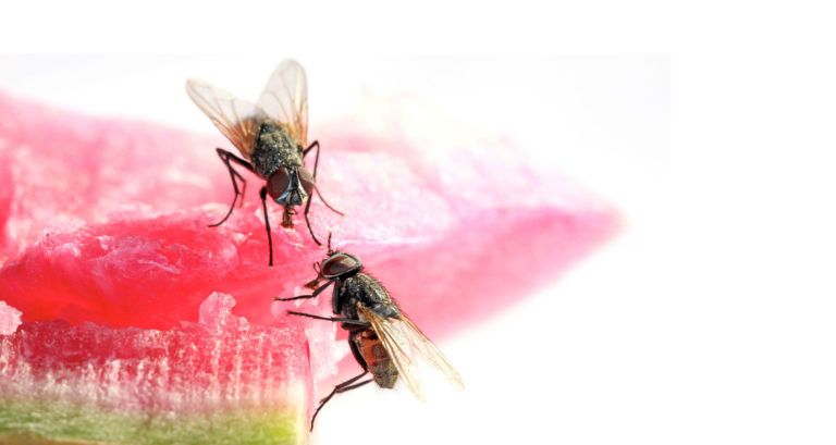 Natural Fly Repellents You Can Make In Your Kitchen ...