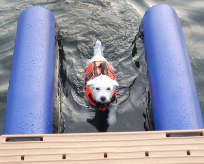 Little dog using the Dog-On Water Ramp.