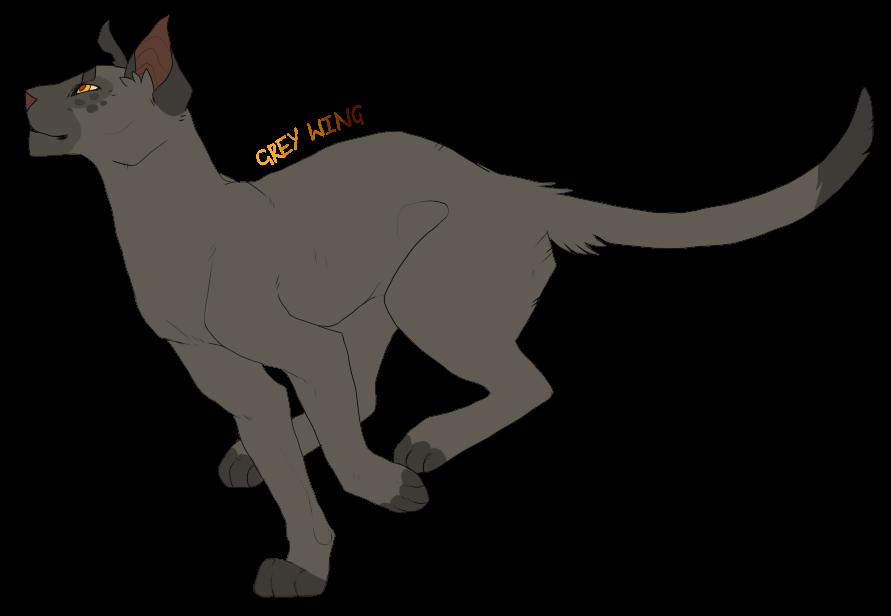 Серые коты воители