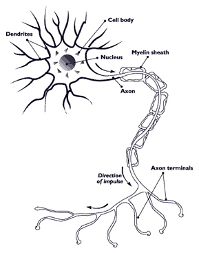 megmagyarázhatatlan fogyás sclerosis multiplex
