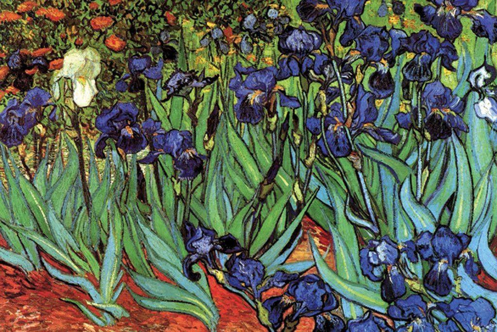 Irises, by Vincent van Gogh