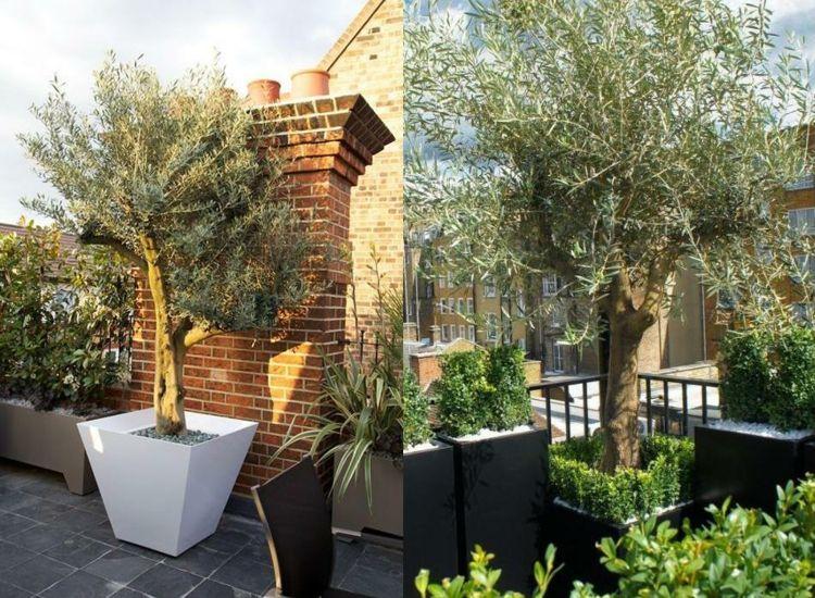 #Balkon Terrasse Gestalten Leicht Gemacht Mit Einem Schönen Olivenbaum! # Terrasse #gestalten #