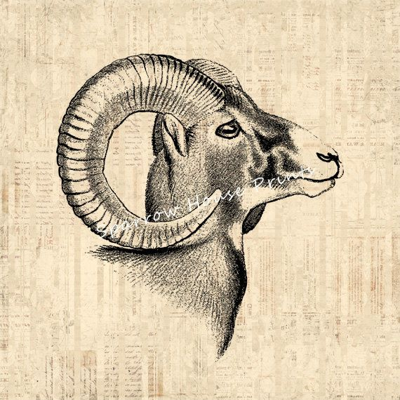 Antique Ram Horns Animal Print Goat Home Decor Vintage Goat Print With  Vintage Script Paper Background