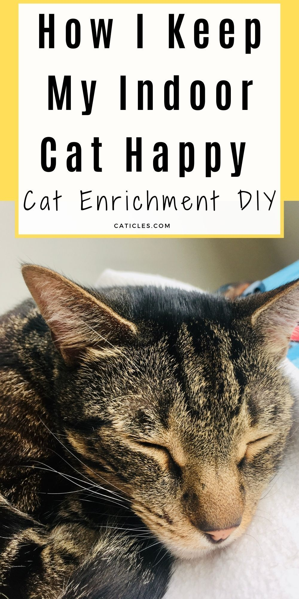 Cat Enrichment Diy 70 Indoor Cat Happiness Ideas Indoor Cat Cats Cat Play Area