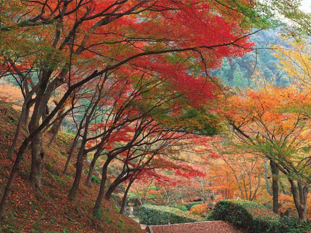 Alberi In Autunno Paesaggi Sfondi Desktop Gratis Alberi Di Autunno Paesaggio Autunnale Arte Paesaggistica