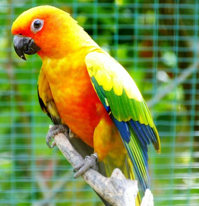 This Vibrant Bird Species Actually Loves You Back Avian Veterinarian Conure Parrots Parrot