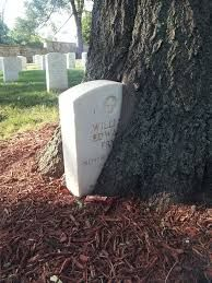 trees growing in and around a head stone