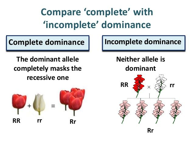 examples of incomplete dominance in humans - Google Search | Biology ...