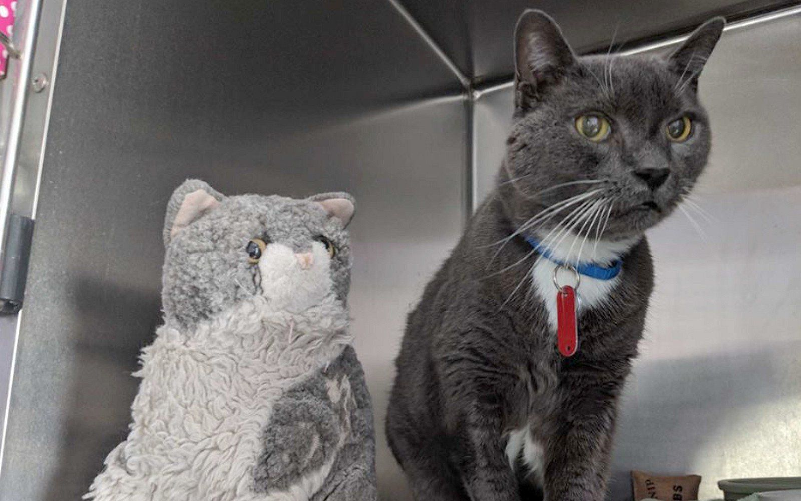 Cat Left In Shelter Gets Reunited With An Unlikely Friend After Years Apart Cat Adoption Cat Rescue Senior Cat