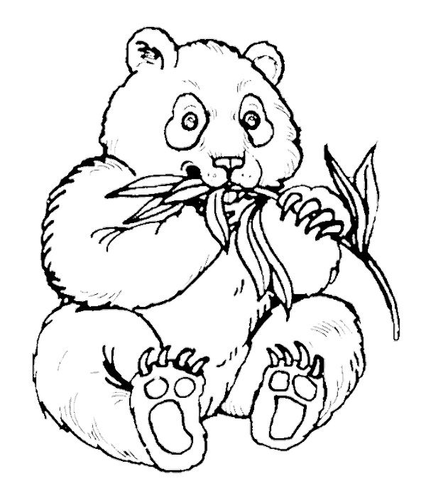 wild panda coloring pages